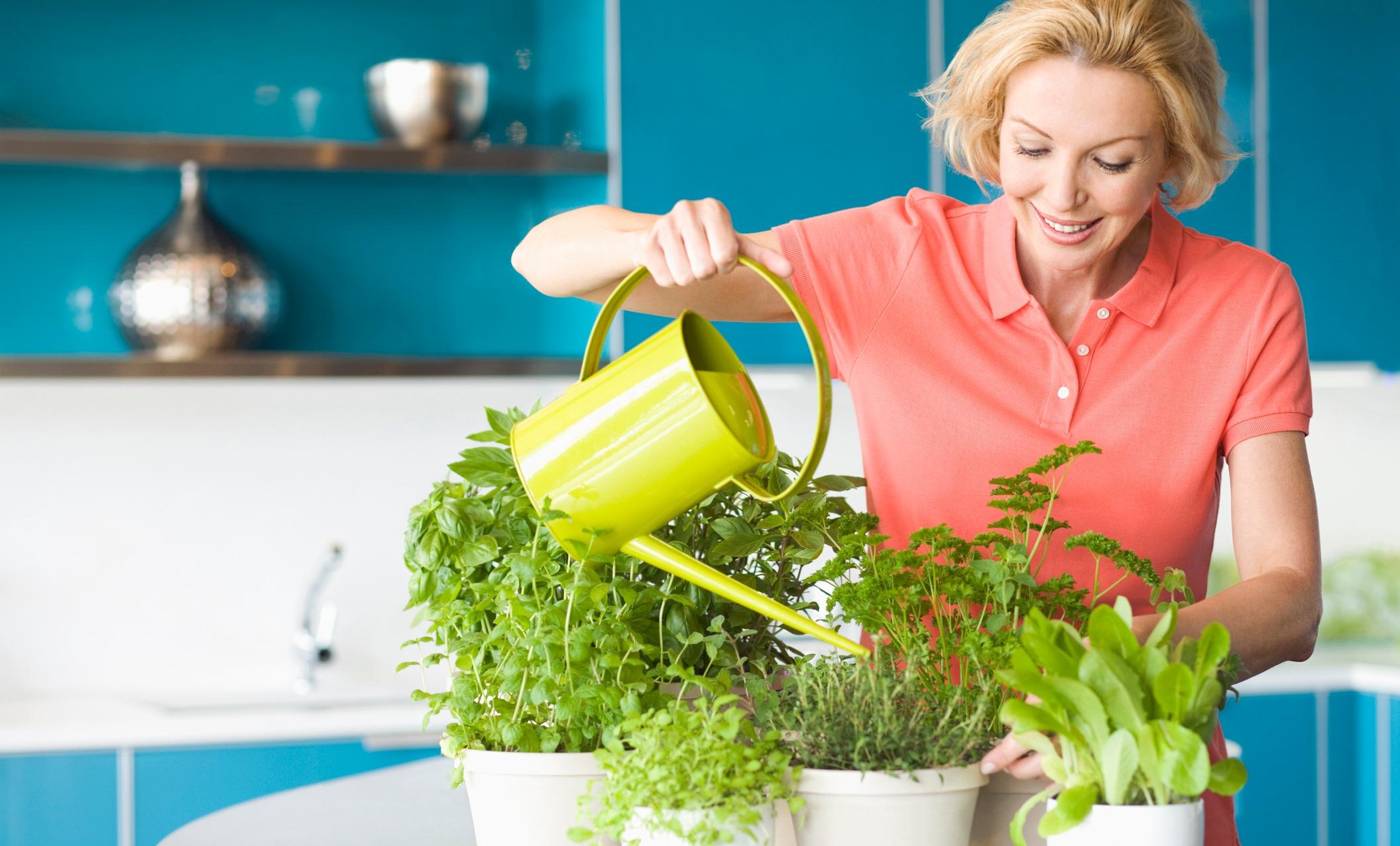 7 лечебных трав, которые легко вырастить дома