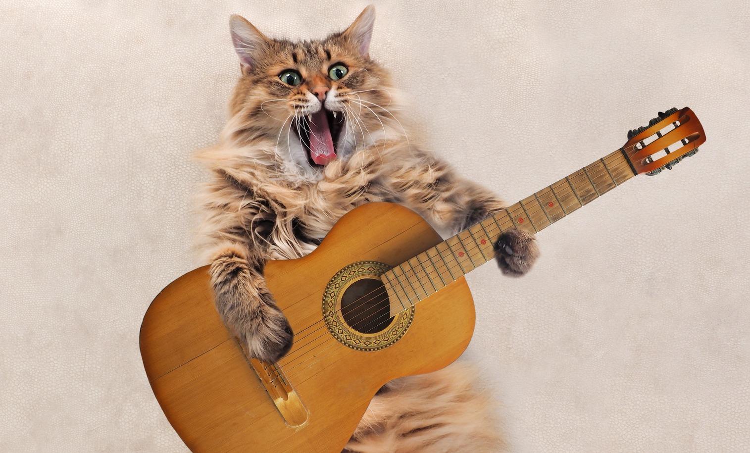Русский кот спел песню на грузинском и стал звездой Интернета