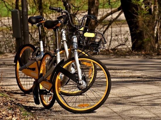Как крутить педали? Милонов предложил тестировать велосипедистов на знание ПДД
