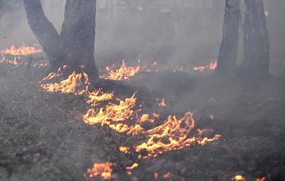 Лесные пожары на площади около 15 тыс. га потушили за сутки в регионах России