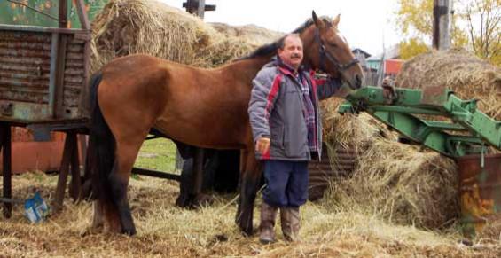 Депутату отказали в парковочном месте для коня