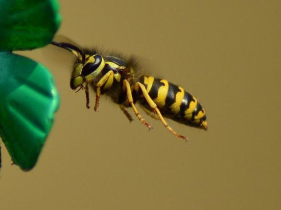 По всему миру исчезают насекомые: учёные опасаются последствий