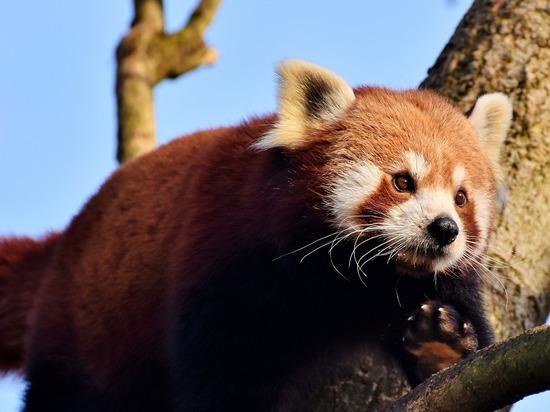 Биологи: скоро человек погубит тысячи видов наземных млекопитающих
